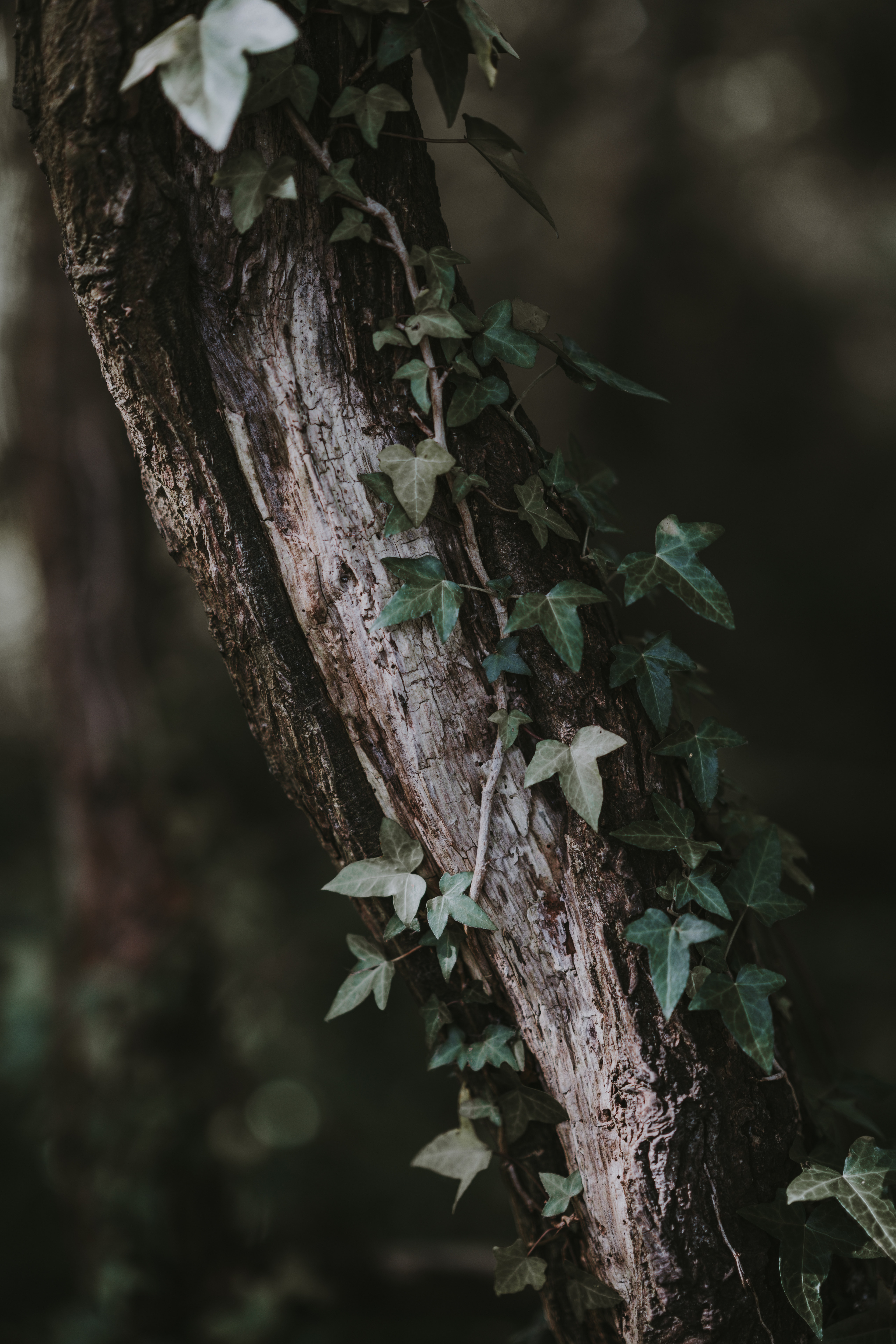 green leafed plant on tree branch