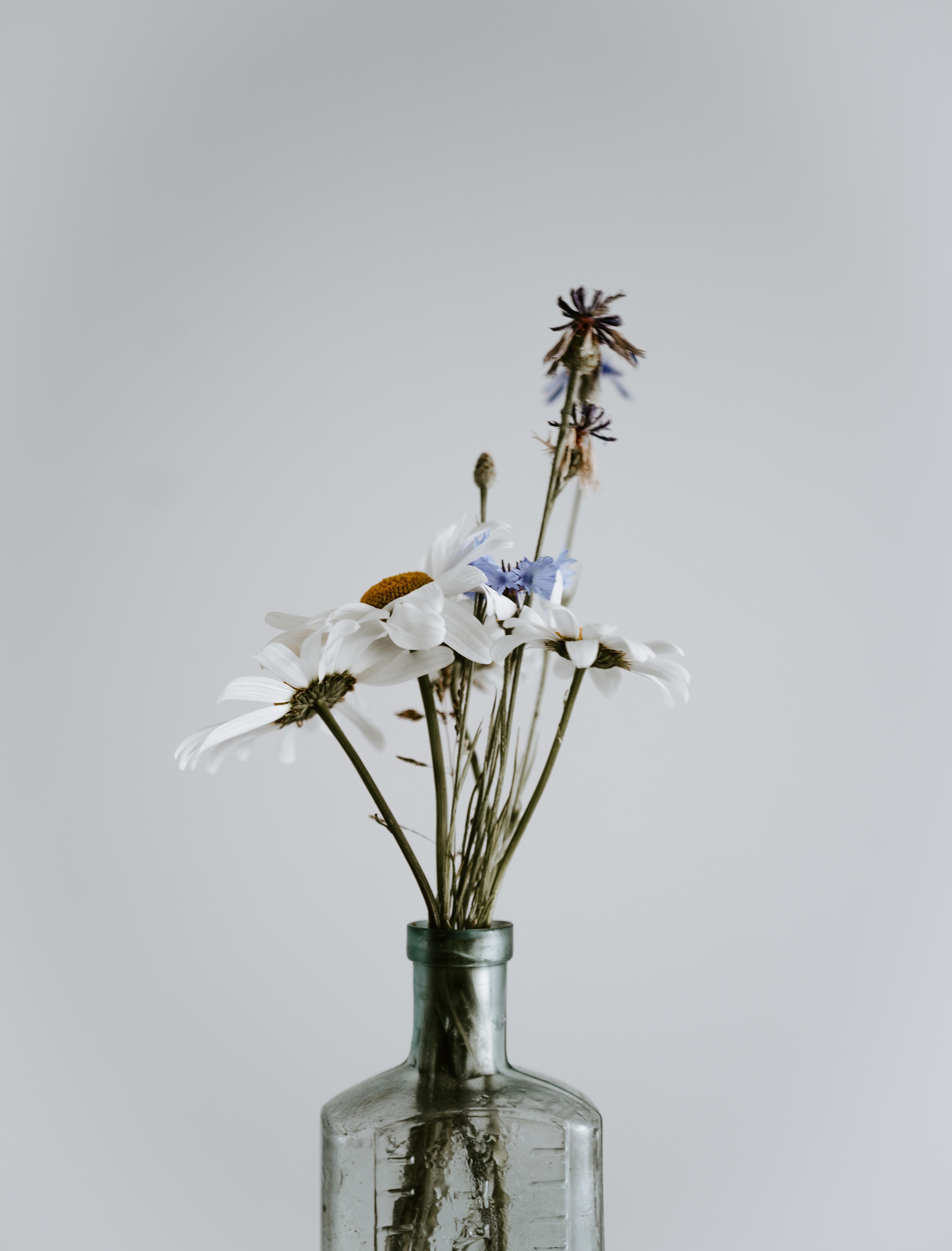 white flower in bottle