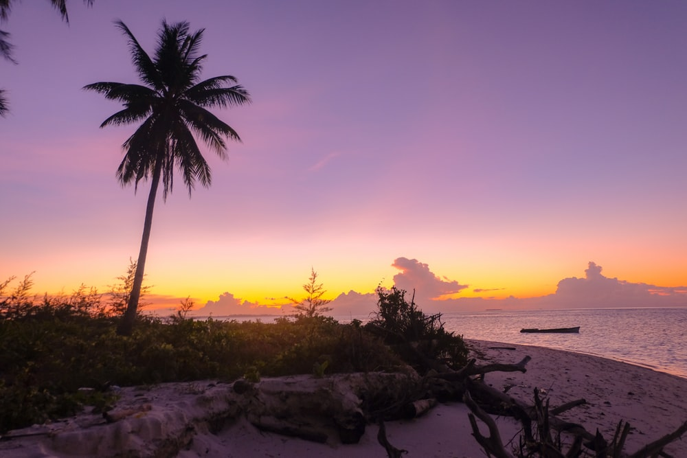 silhouette of coconut tree during sunset