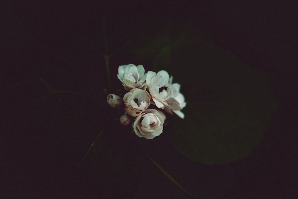 500 black and white flower pictures hd download free images on white flowers mightylinksfo