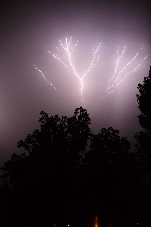 silhouette of trees under thunder lightning