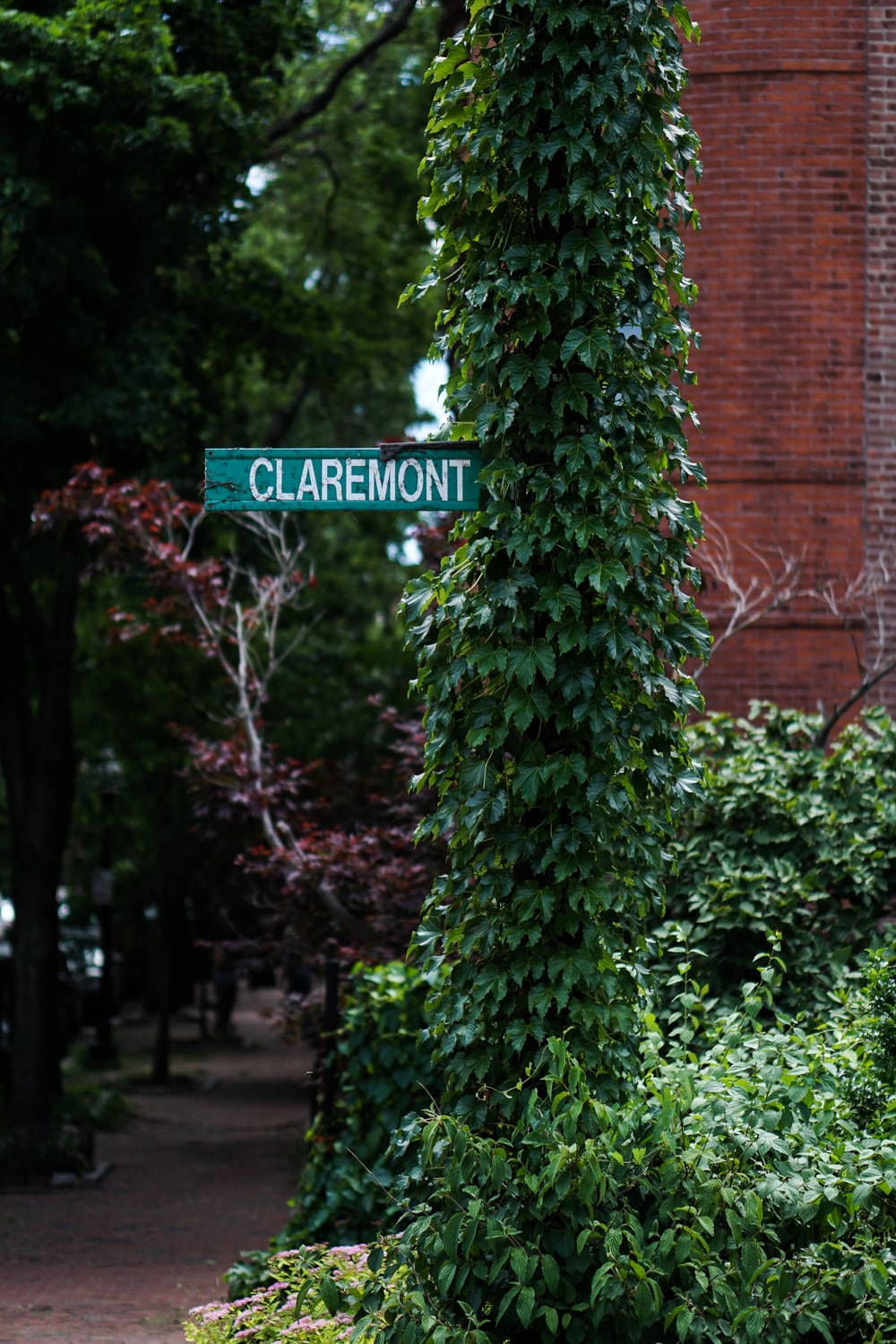 Claremont sign on green leafed plant post
