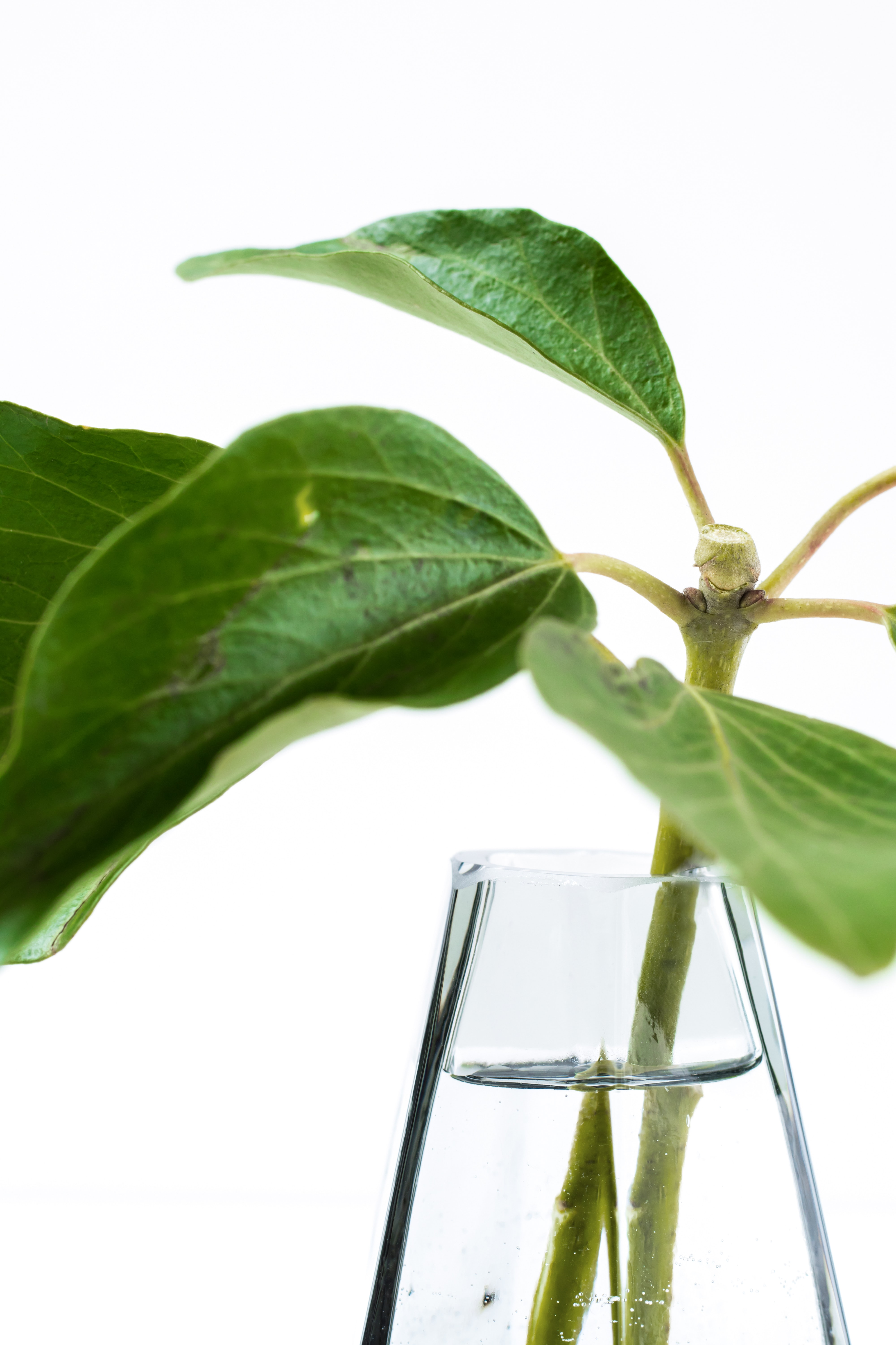 green leafed plant in glass vase