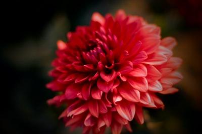 3988. Virágok