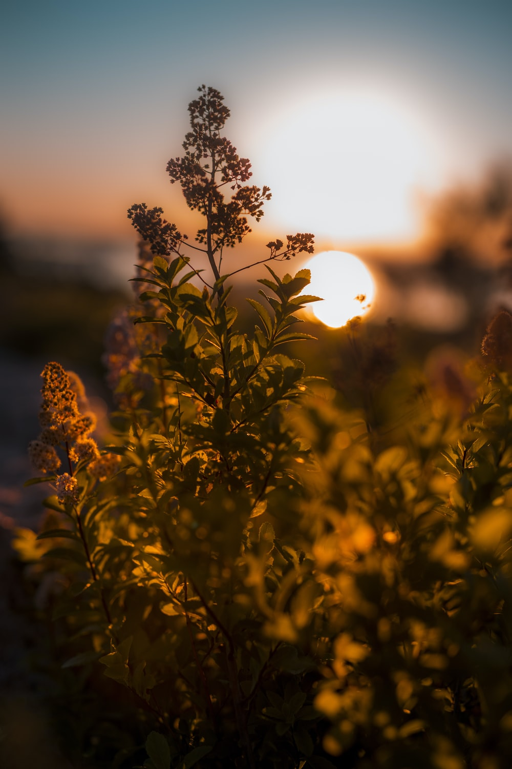 green leafed plant during sunset