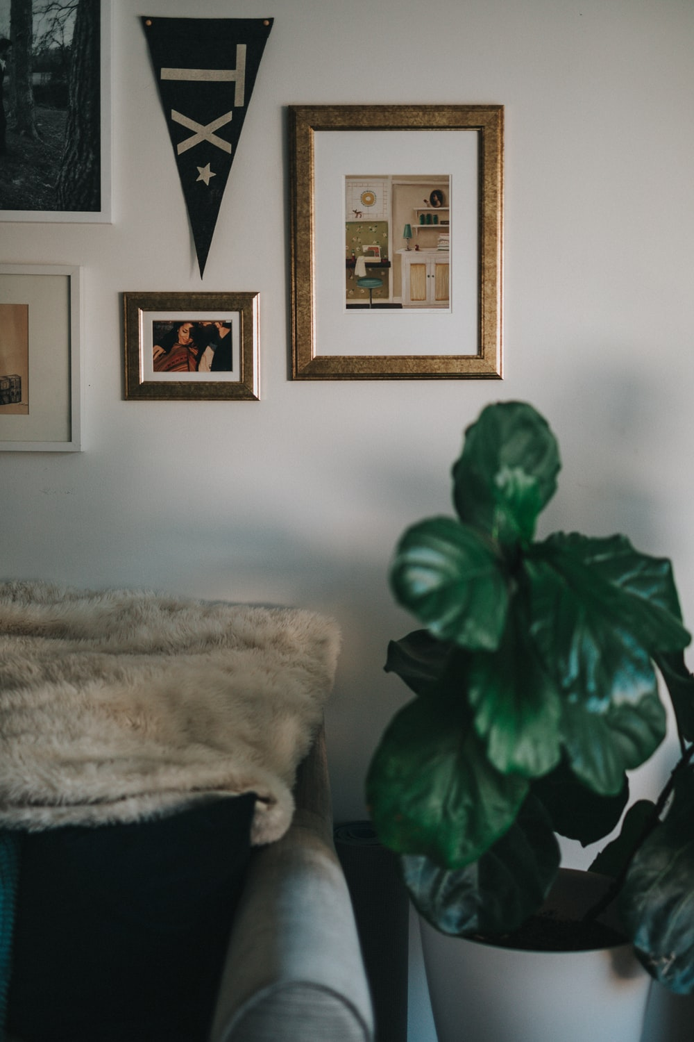 green leafed plant in vase near sofa