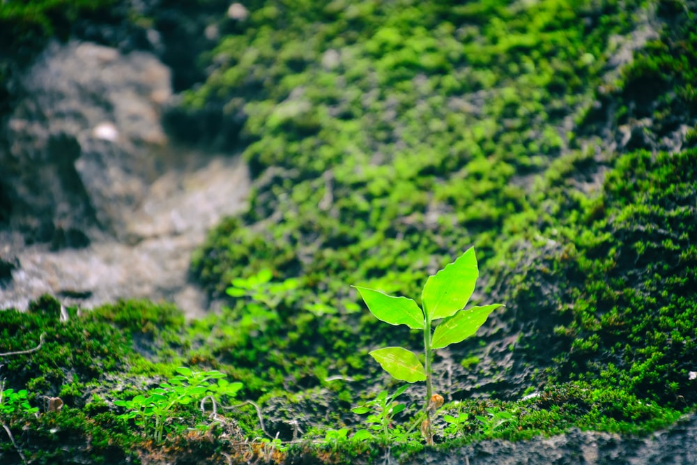 green leafed plant on grassfield