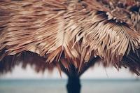Grass umbrella