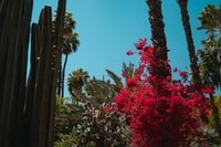 cactus plant near red flowers