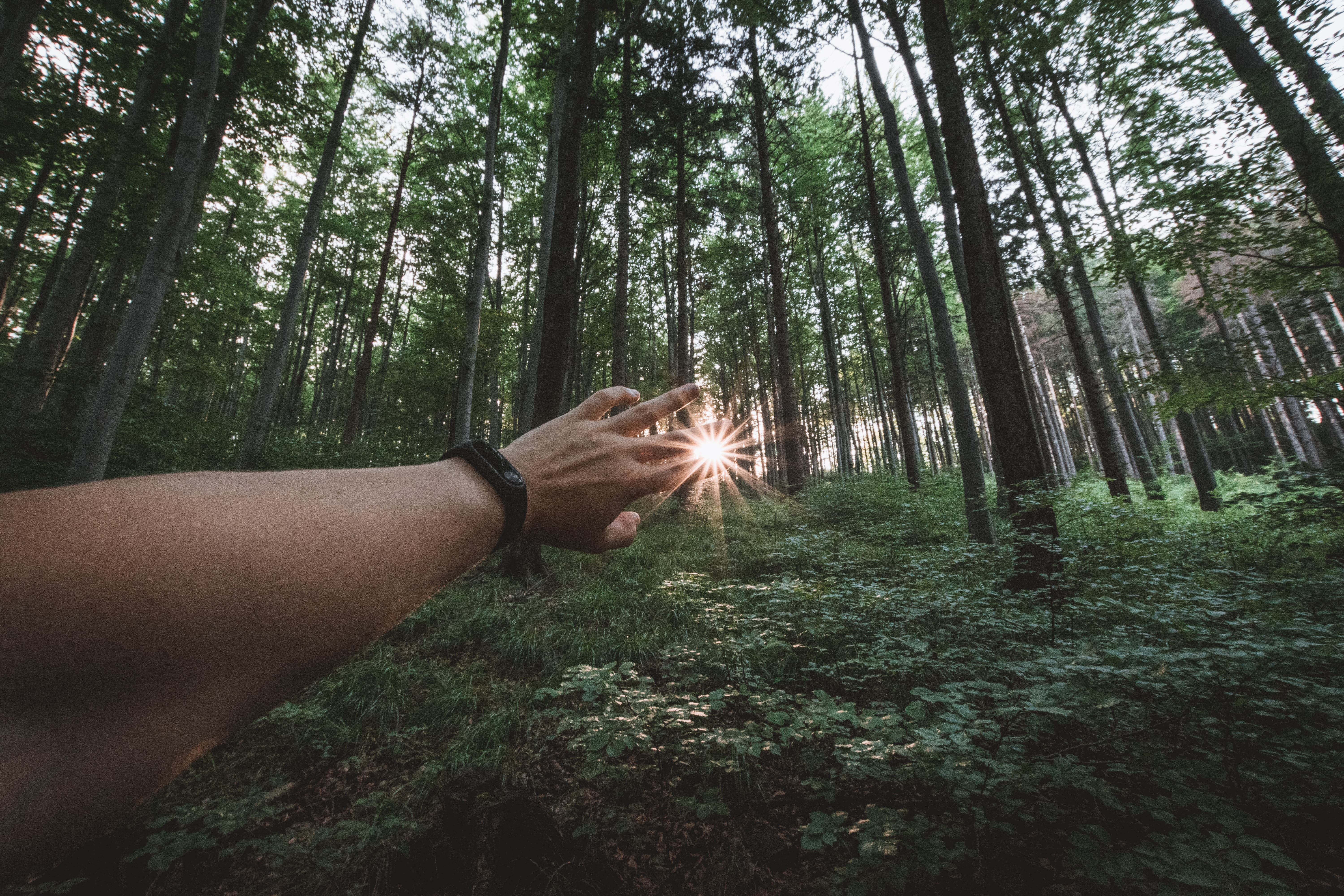 piercing sun on persons hand standing on forest