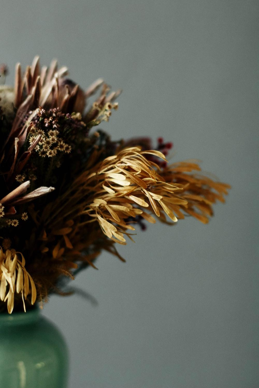 Dead Flower Pictures [HD]   Download Free Images on Unsplash