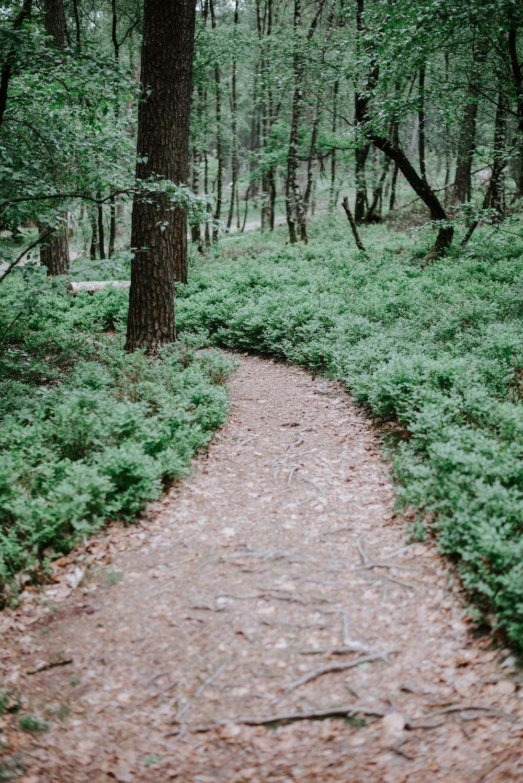brown pathway between green leafed trees