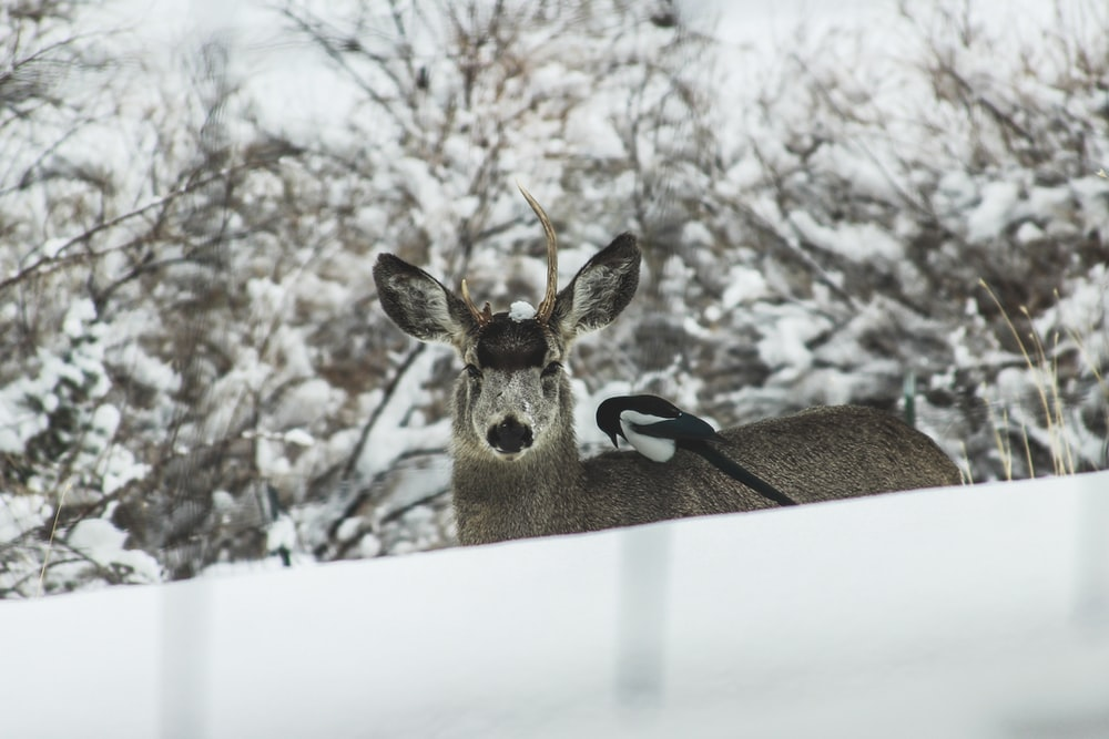 brown deer near tree covered with snow