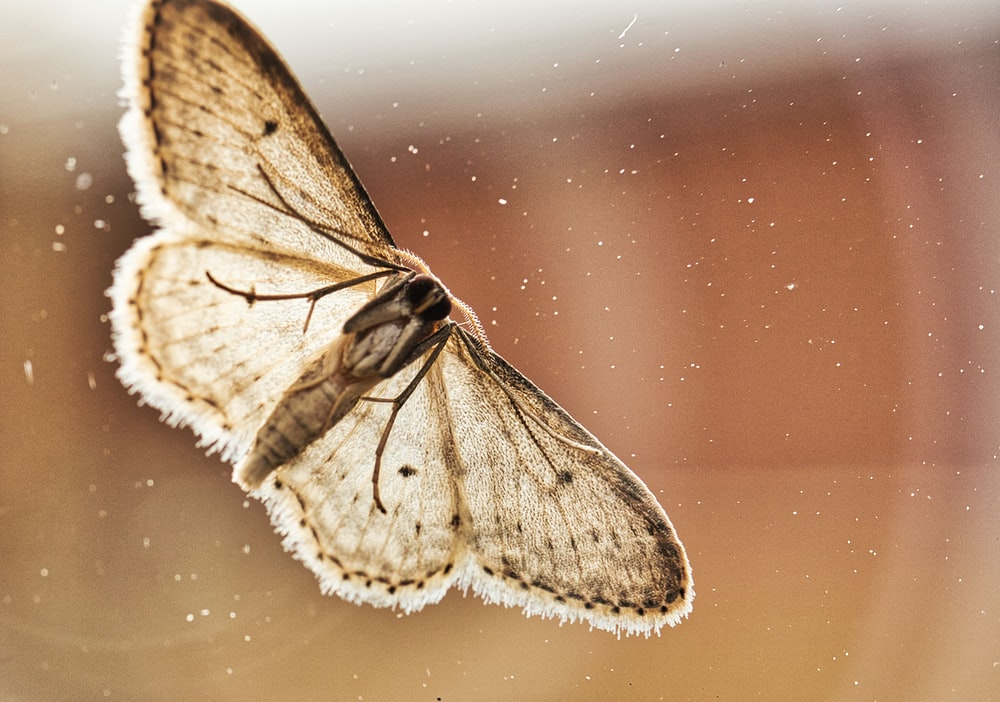 shallow focus photography of brown butterfly