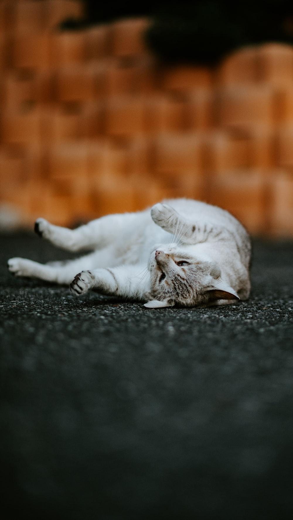 cat on gray pavement
