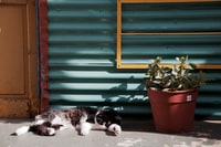cat sleeping near potted plant