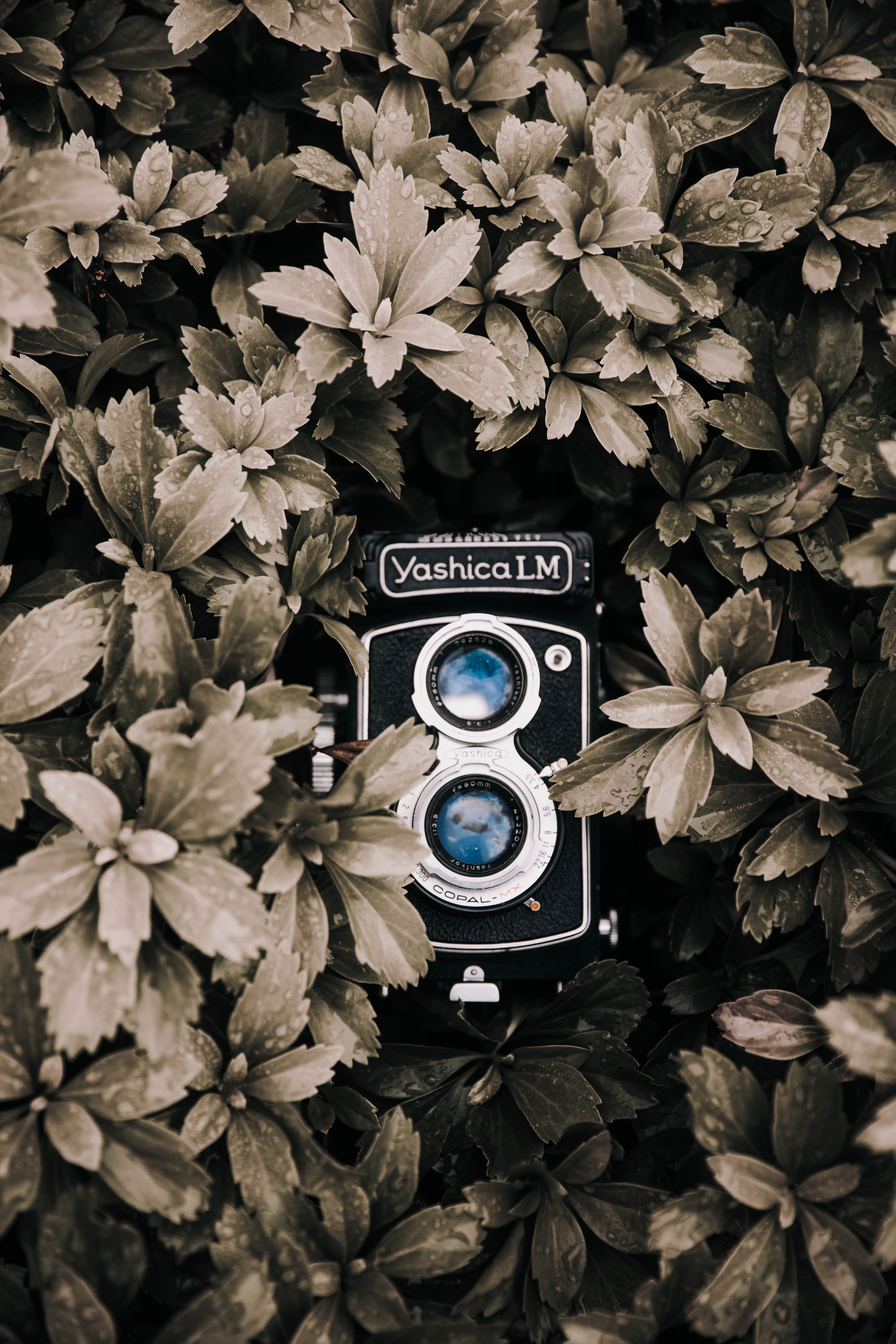 black and gray Yashica LM camera in selective focus photography