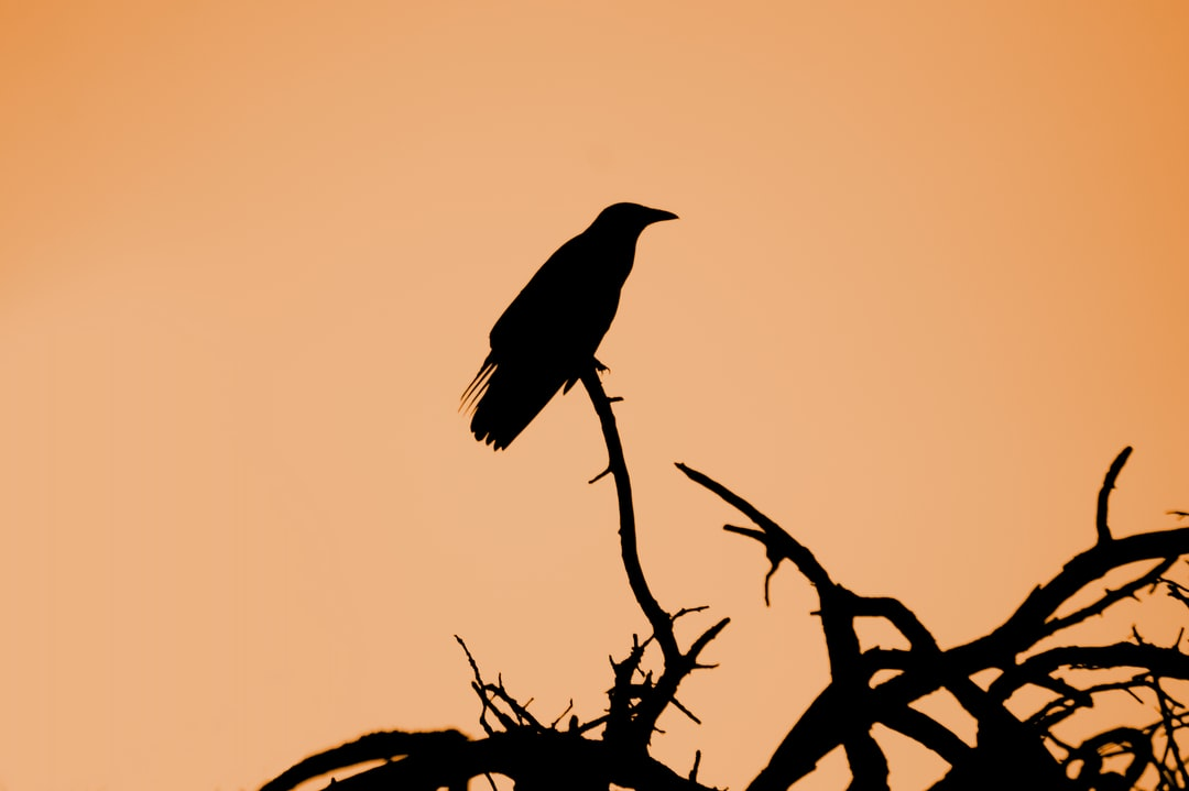 I got up really early this morning in June to get some nice shots of the sun rising over the meadows of the river Regnitz in Erlangen, Germany. When I was just leaving I saw this crow sitting on a low branch of a nearby bush and was lucky that I had the tele lens with me. Just a bird enjoying the early sun in the morning. A reminder for us all to relax and don't rush too much.