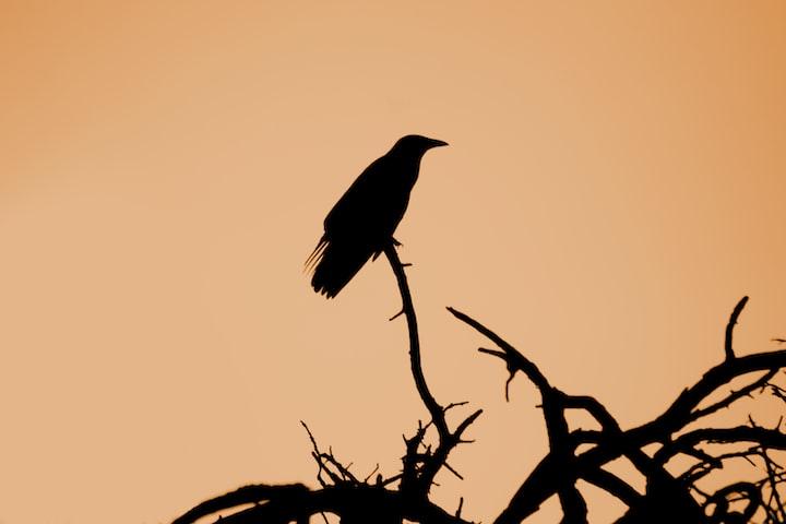 Crows Aren't Bird-brained