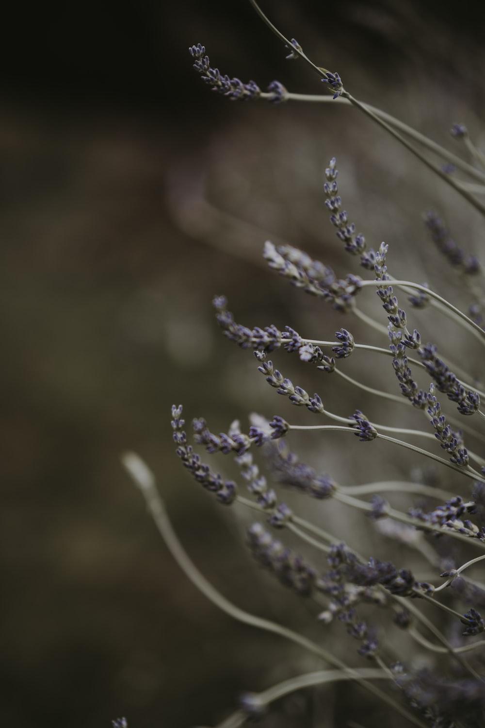 shallow focus photography of grey grass