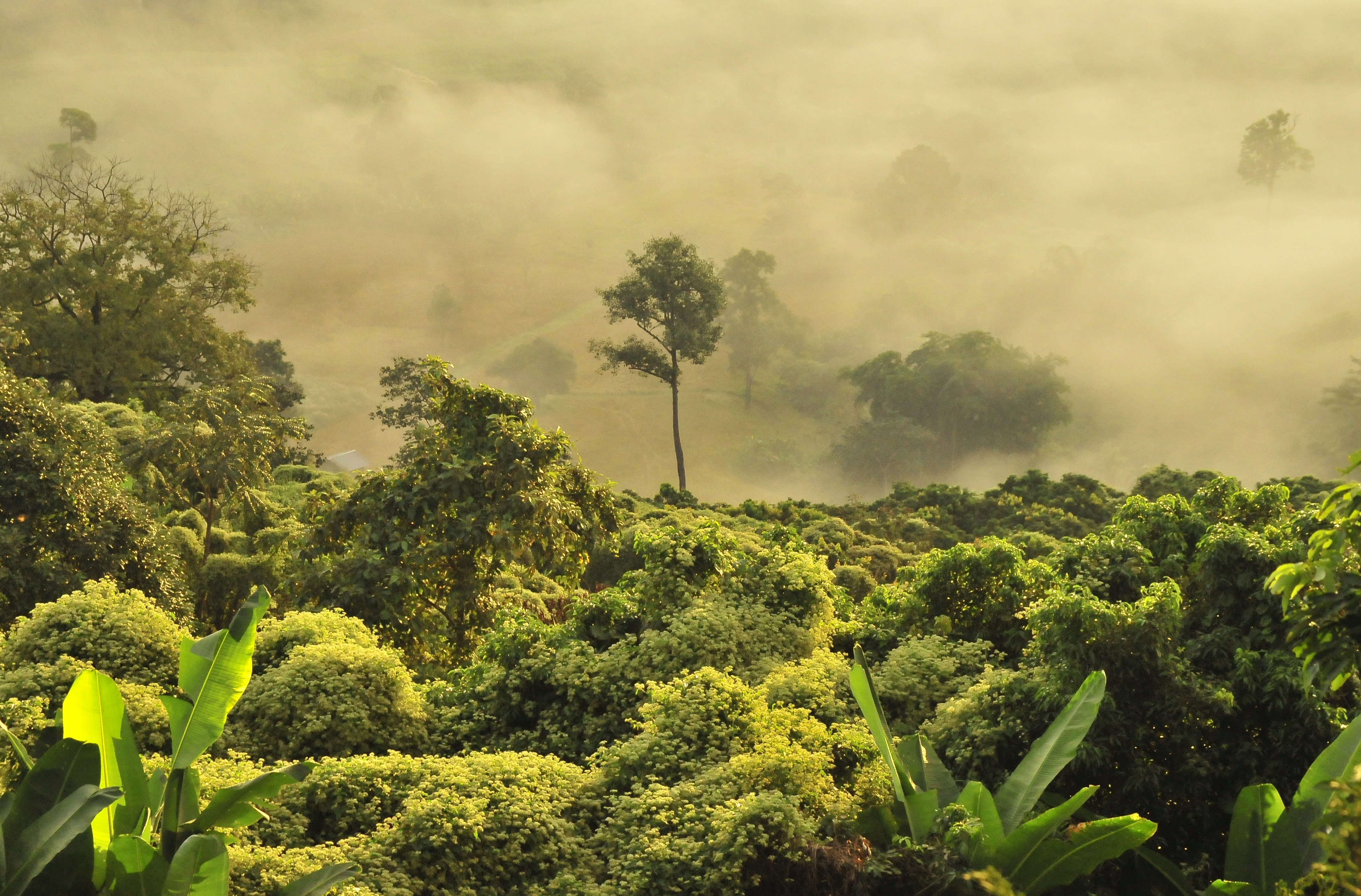 photo of green forest with fog