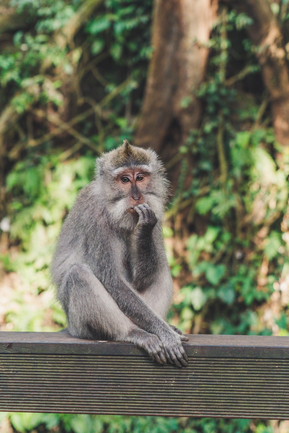 gray monkey under sunny sky