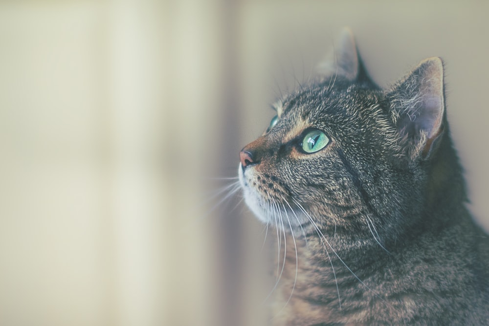 shallow focus photography of brown cat