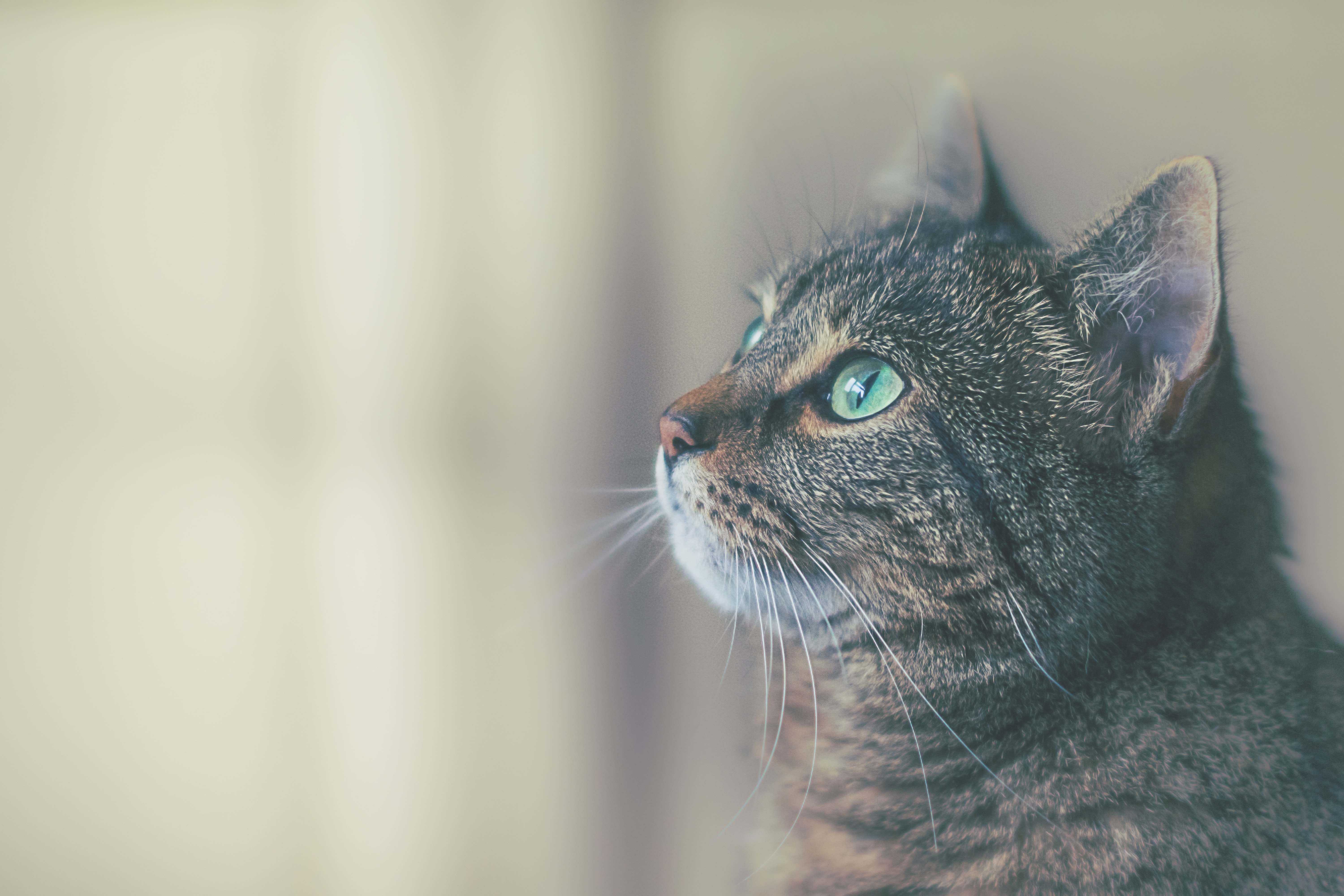 20 Cat Pictures Images Hd Download Free Images Stock Photos