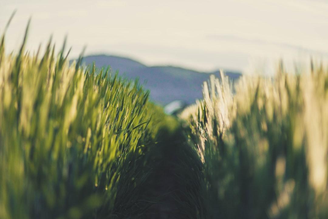 Wandering  in the  fields.
