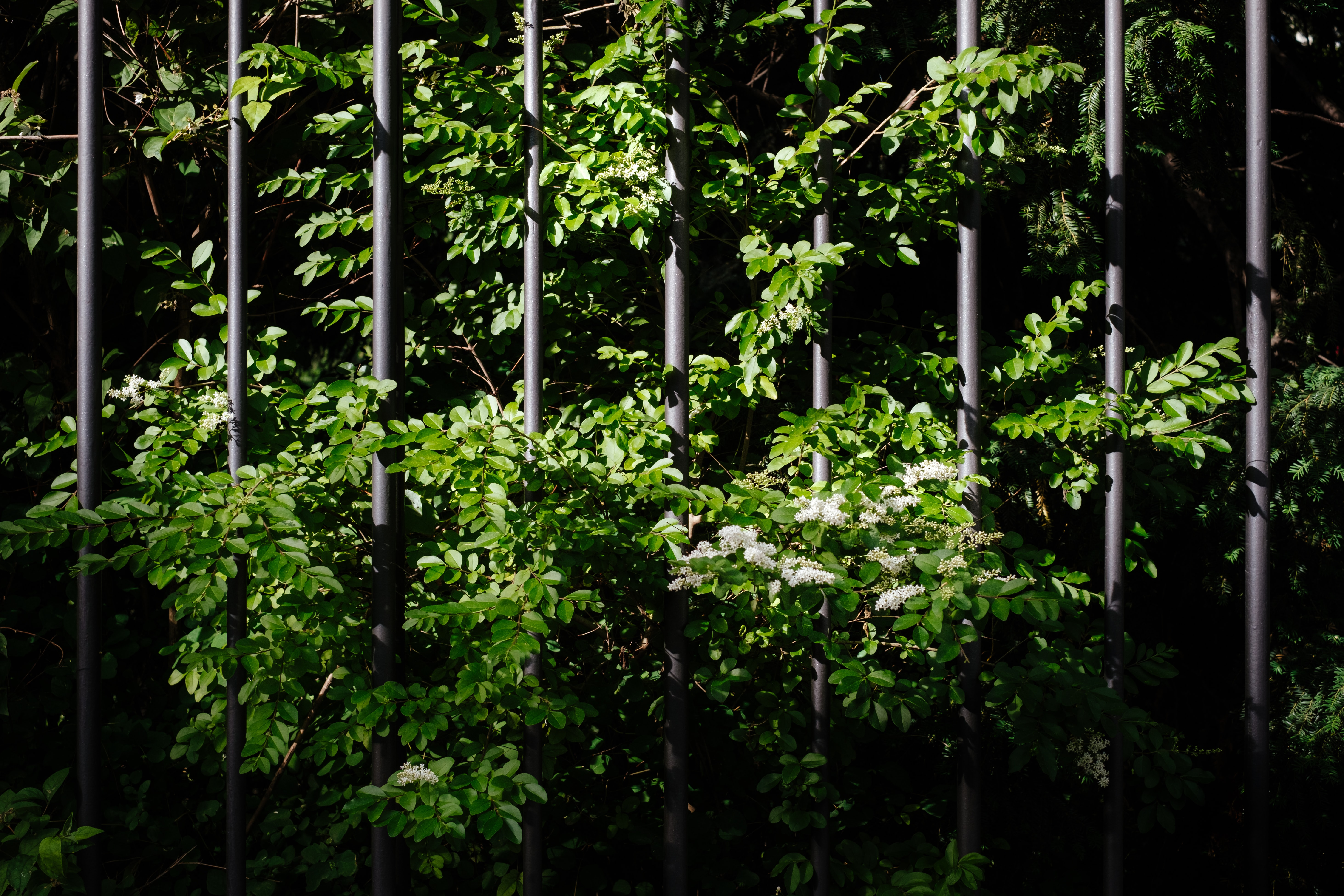 green plants overlapping on fence
