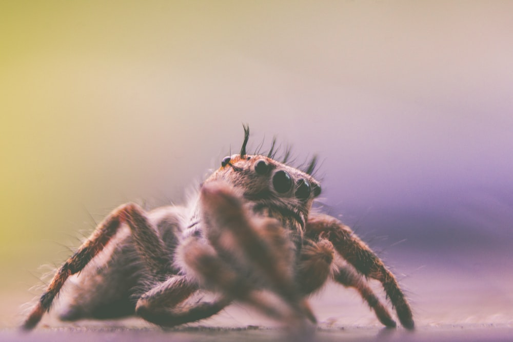 depth of field photography of spider