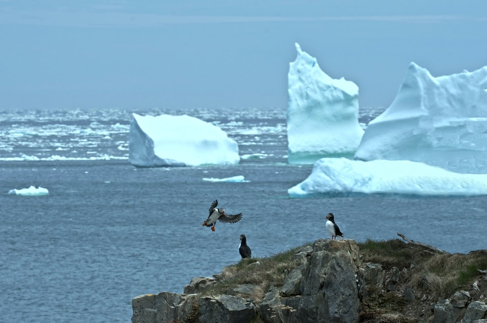 penguin near melted ice berg