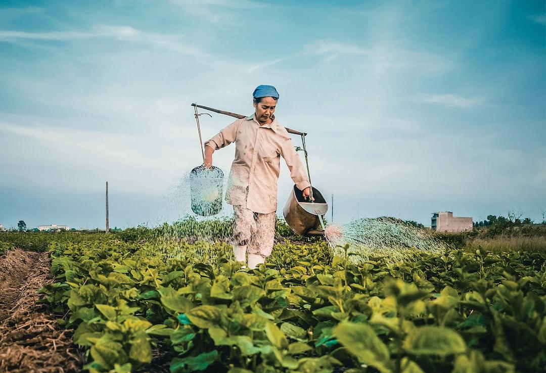 Những gánh nước trên vai, gieo mầm cho sự sống tươi xanh.