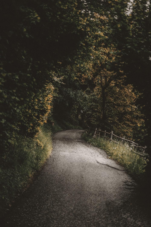 brown concrete road surrounding trees