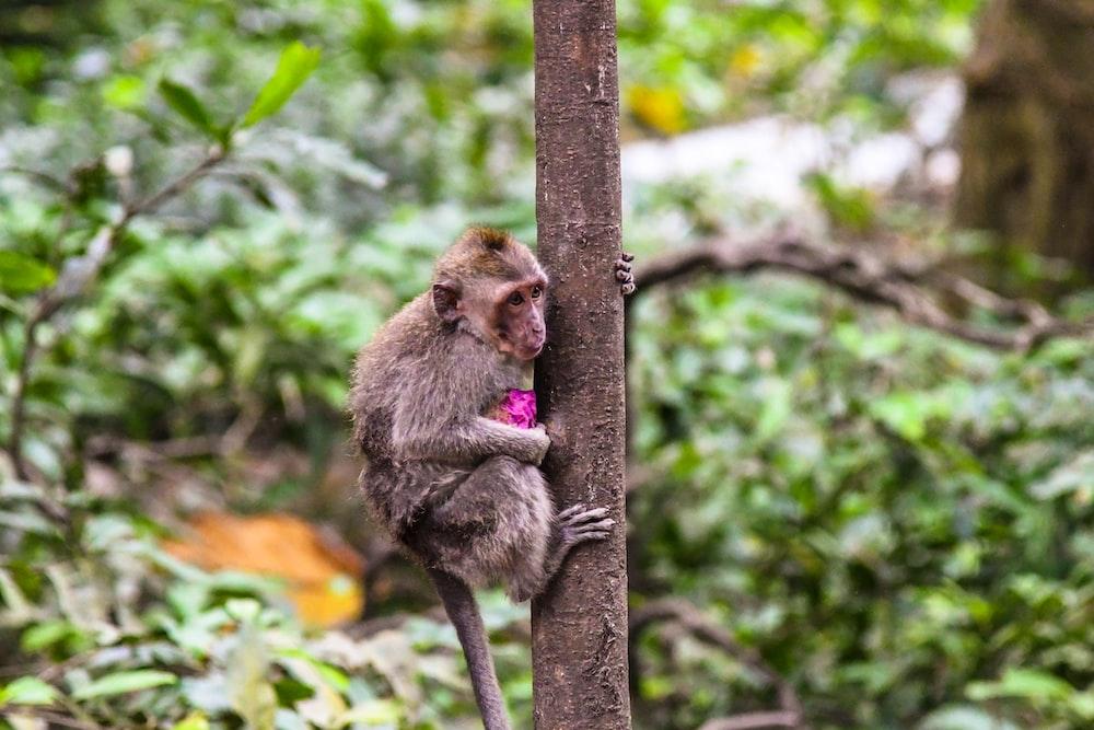 brown monkey climbing on tree at daytime
