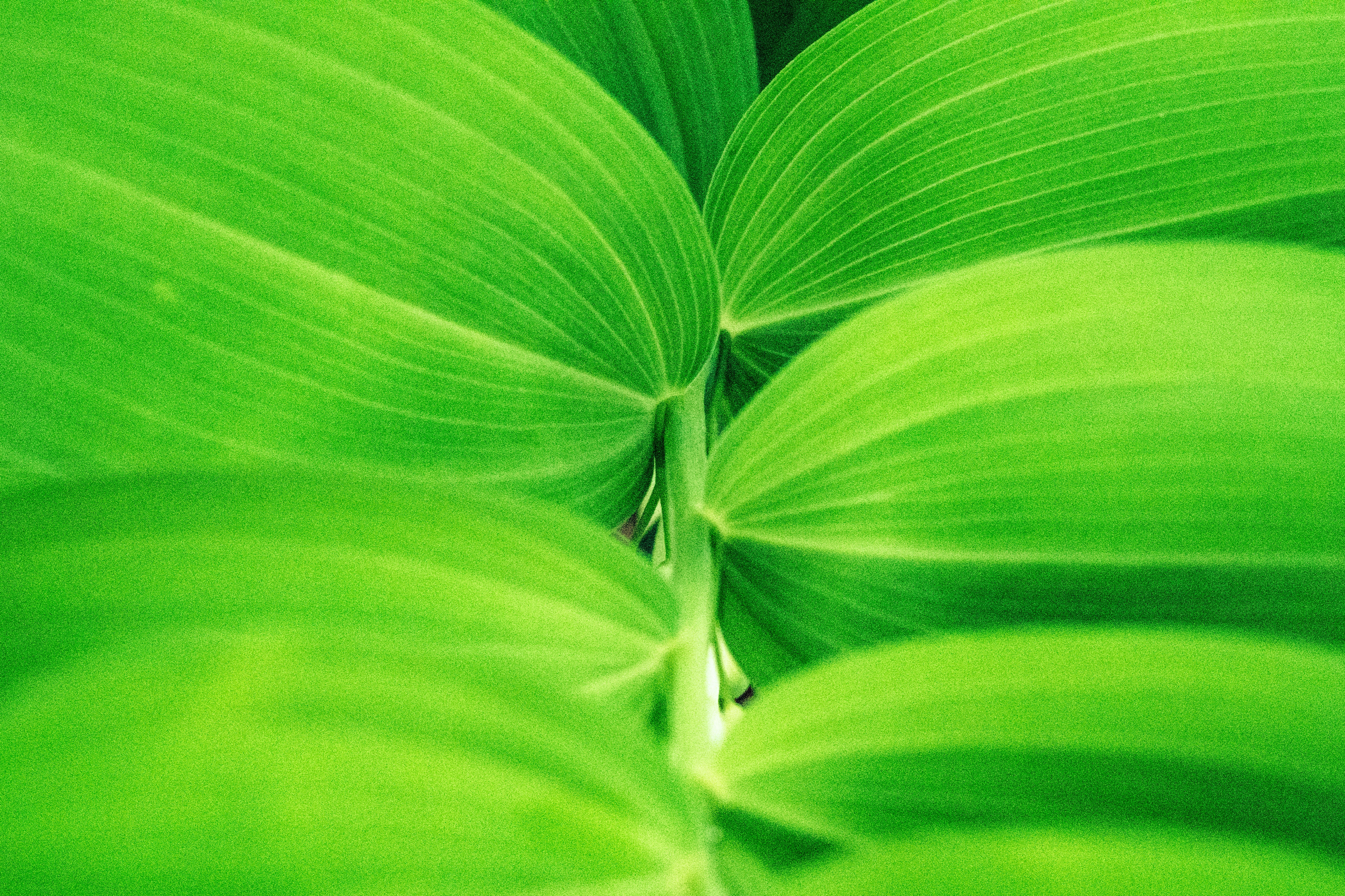 macro photography of green leave