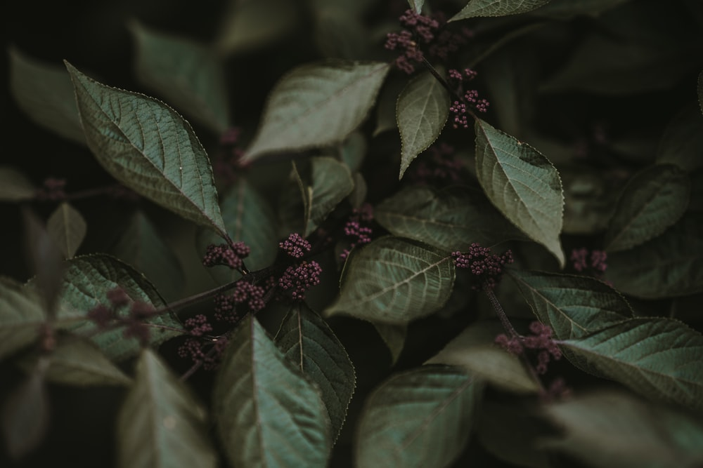 closeup photography of green leafed plants