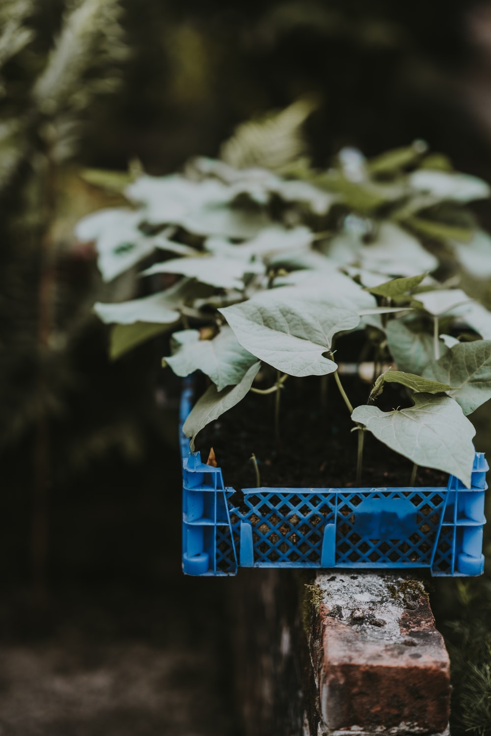 green leafed plant in crate