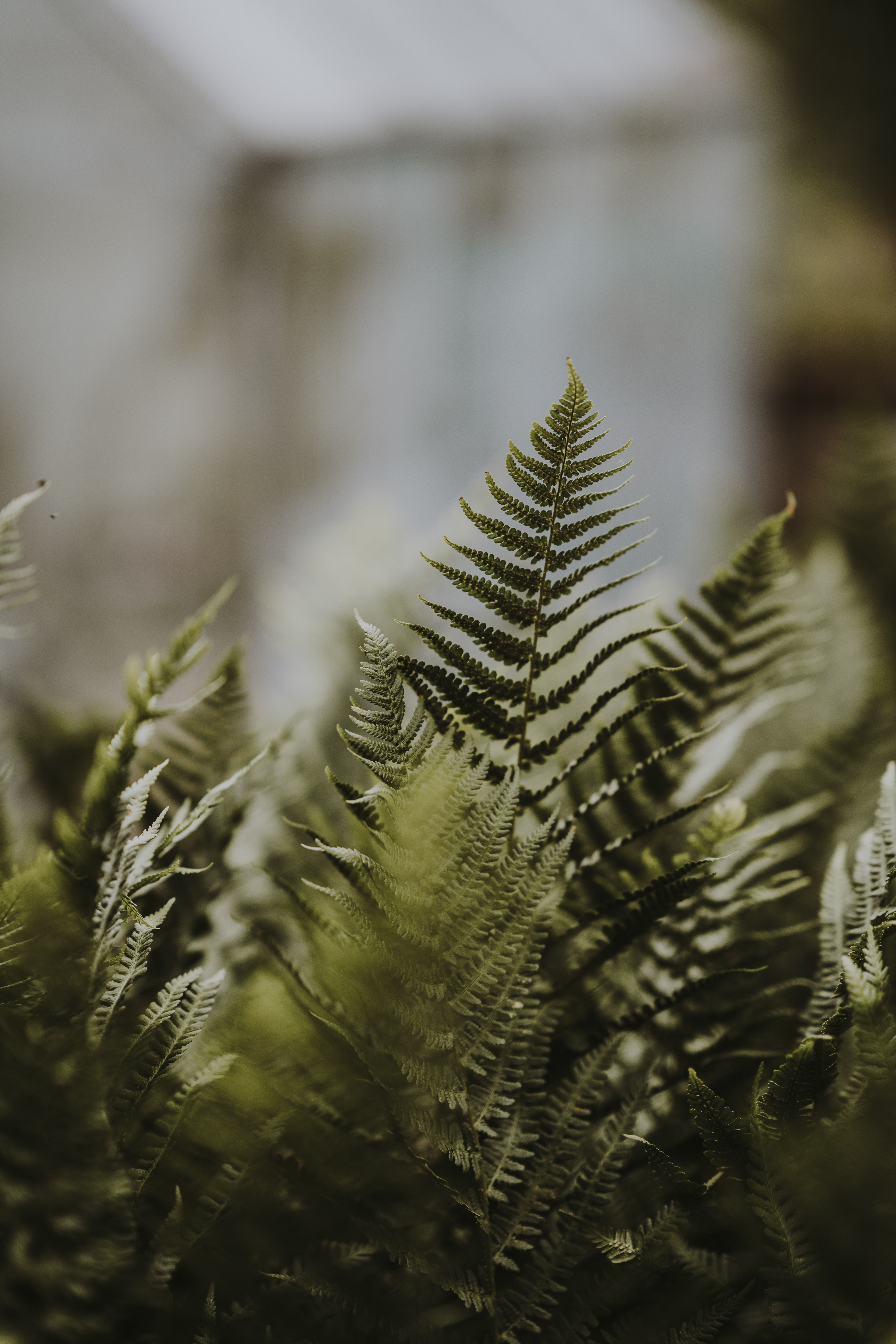 selective focus photo of green fern plant at daytime