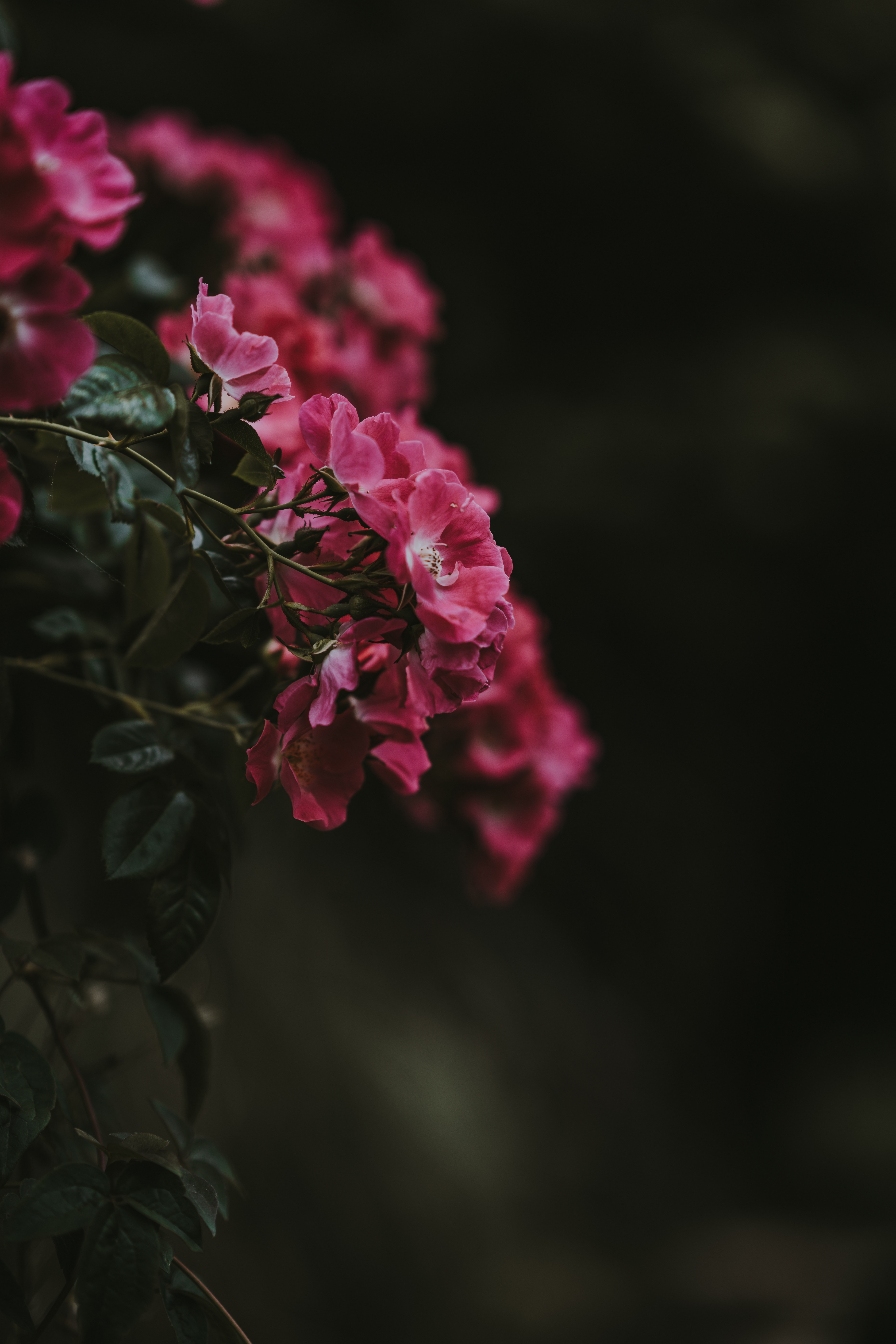 red clustered petaled flower in selective focus photography