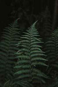 Növények világa