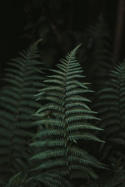 1593. Növények világa