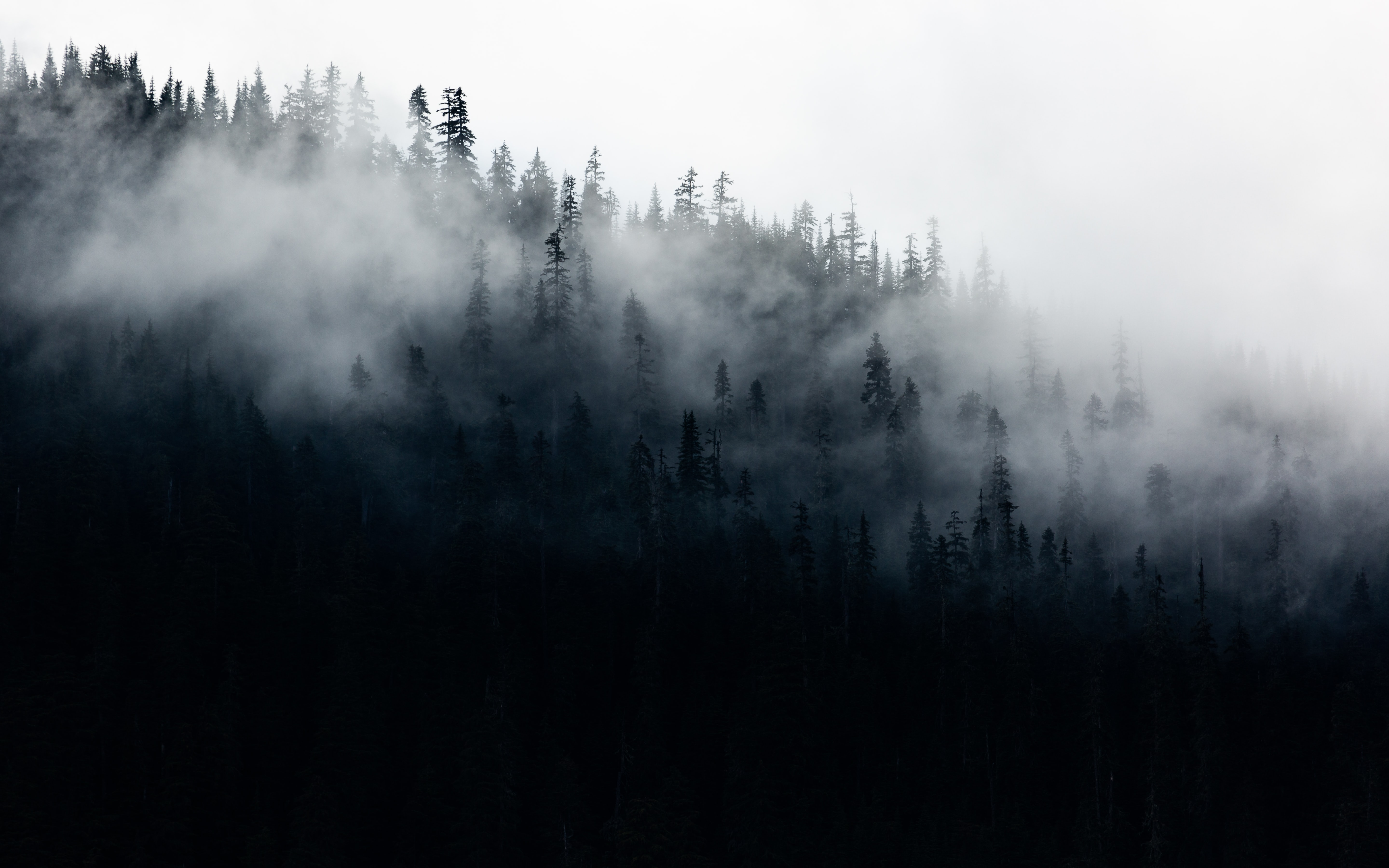 green trees surrounded by fog