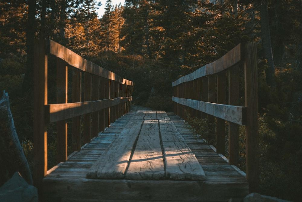 brown wooden bridge in forest