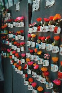 variety of cactus plant on mug decors
