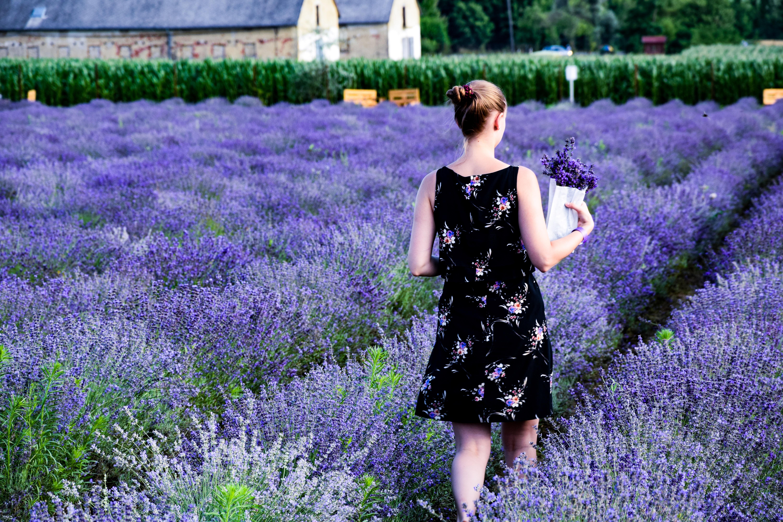 woman walking on purple lavender field