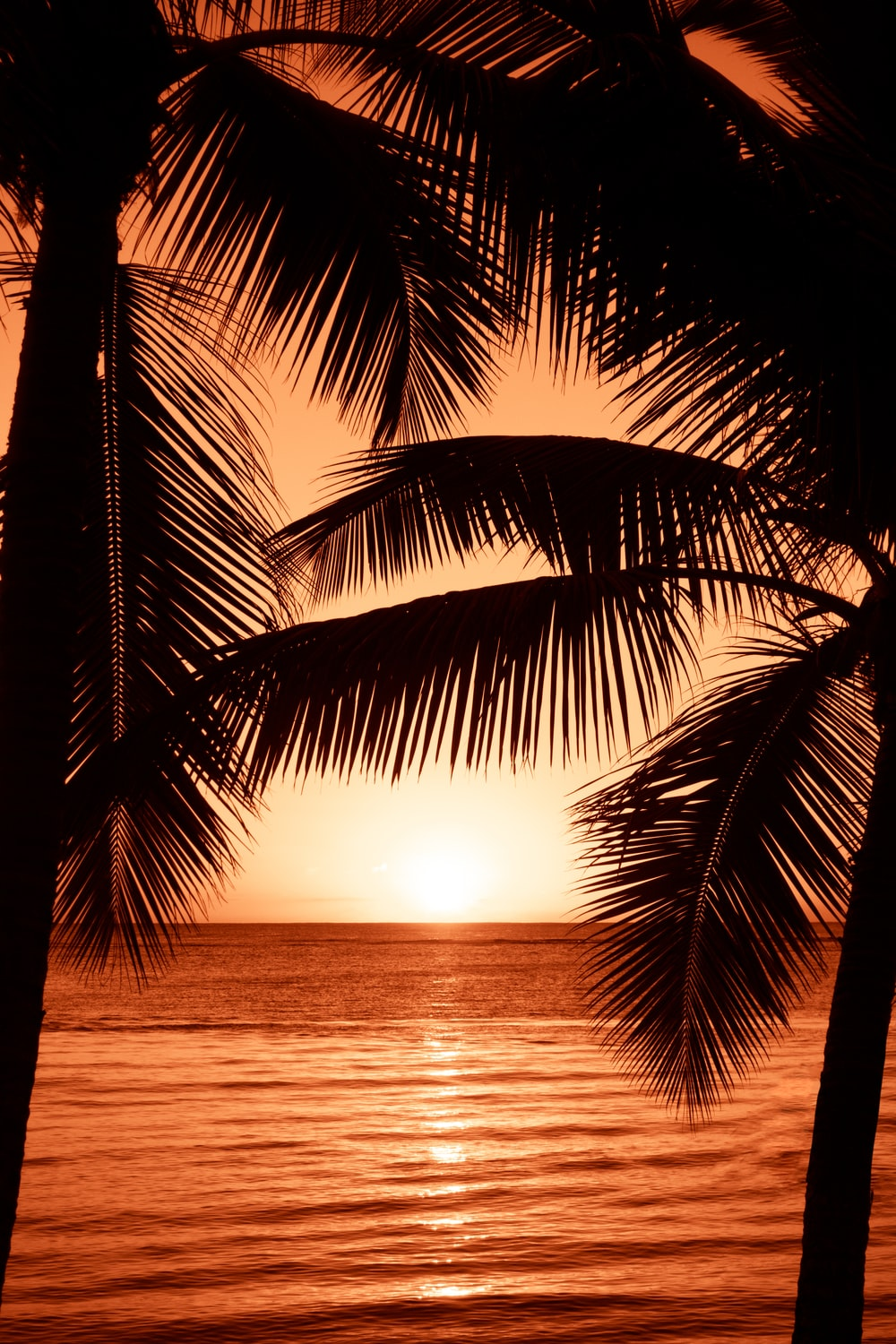 silhouette photography of two coconut trees near body water during golden hour