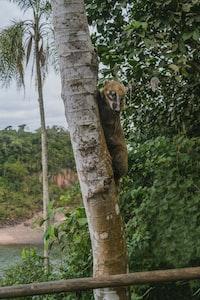 brown animal climbing on tree