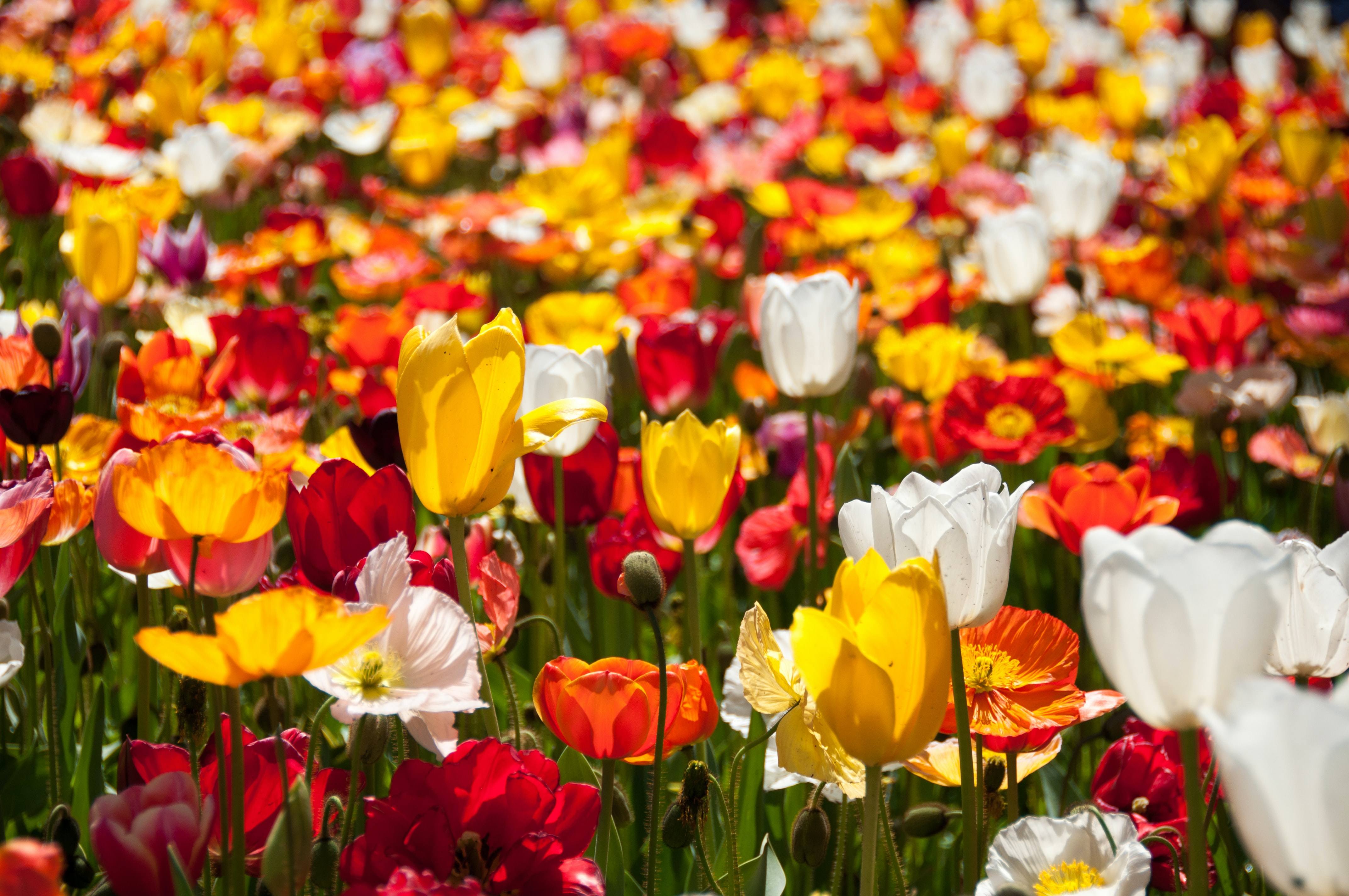 assorted-color petaled flowers at daytime