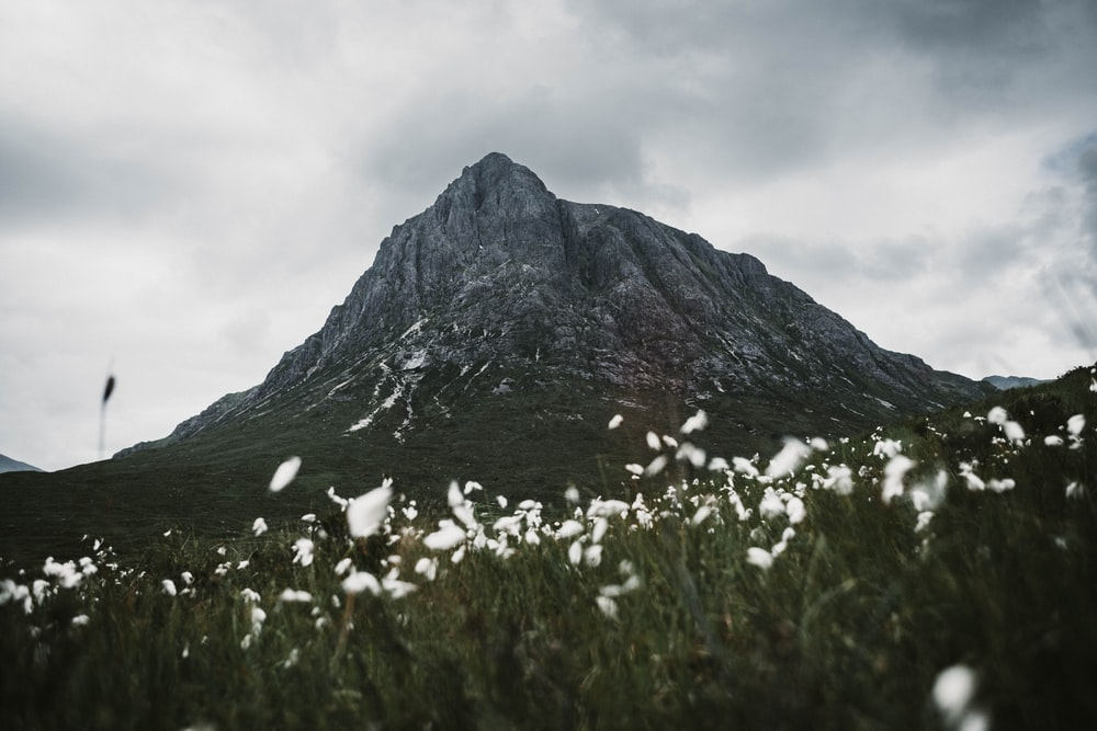 Mountain flower pictures download free images on unsplash white flowers near rock formation mightylinksfo